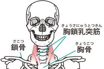 胸鎖乳突筋のストレッチ