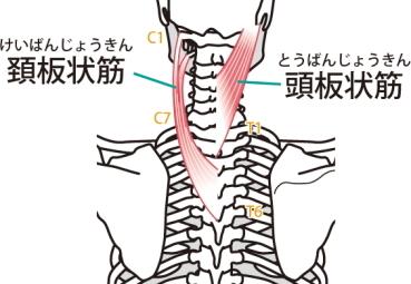 の 痛い 首 後ろ