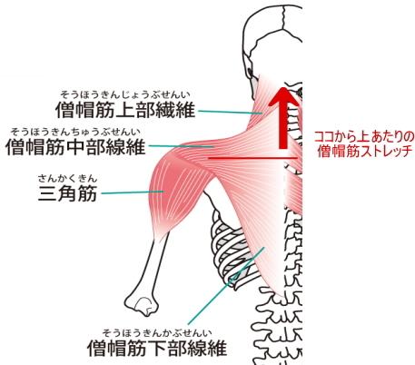 三角 筋 筋肉 痛
